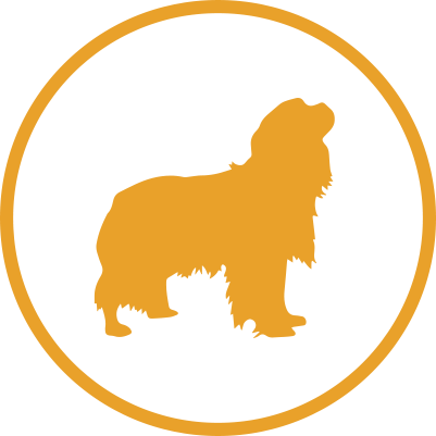 Medium dog grooming prices icon
