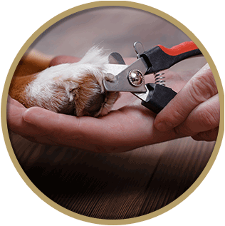 dog grooming Nail Clipping
